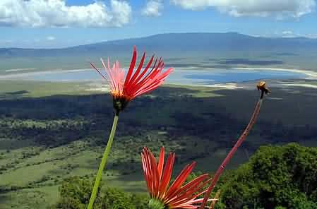 Ngorongoro-crater06