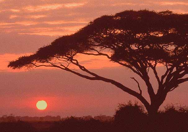 Africa13