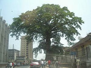 300px-Cotton_Tree_(Sierra_Leone)