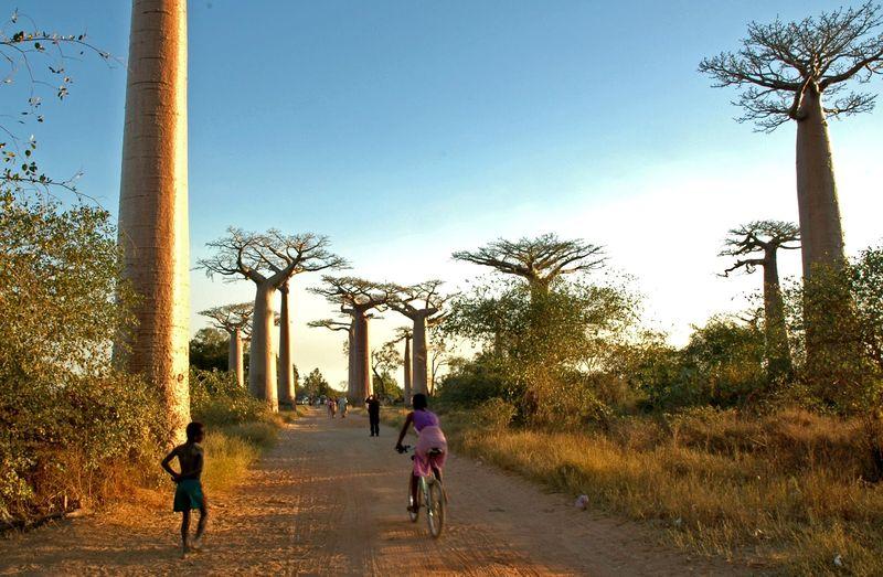 Madagascar 37
