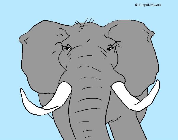 Elefante-africano-animali-la-selva-dipinto-da-mattia747-1057368