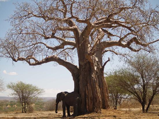 Tarangire-safari-lodge
